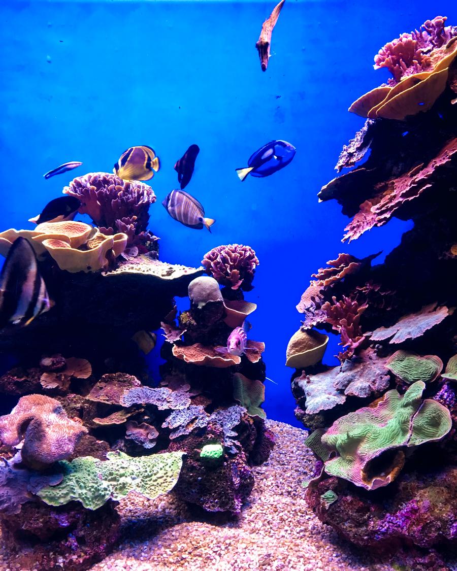 palma aquarium in mallorca