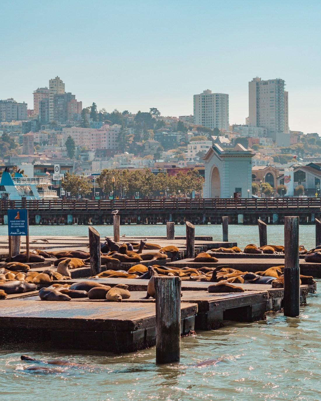 sealions at Pier 39 in San Francisco