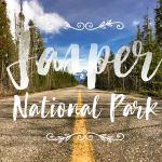 Little Miss Turtle | Jasper National Park in a wheelchair