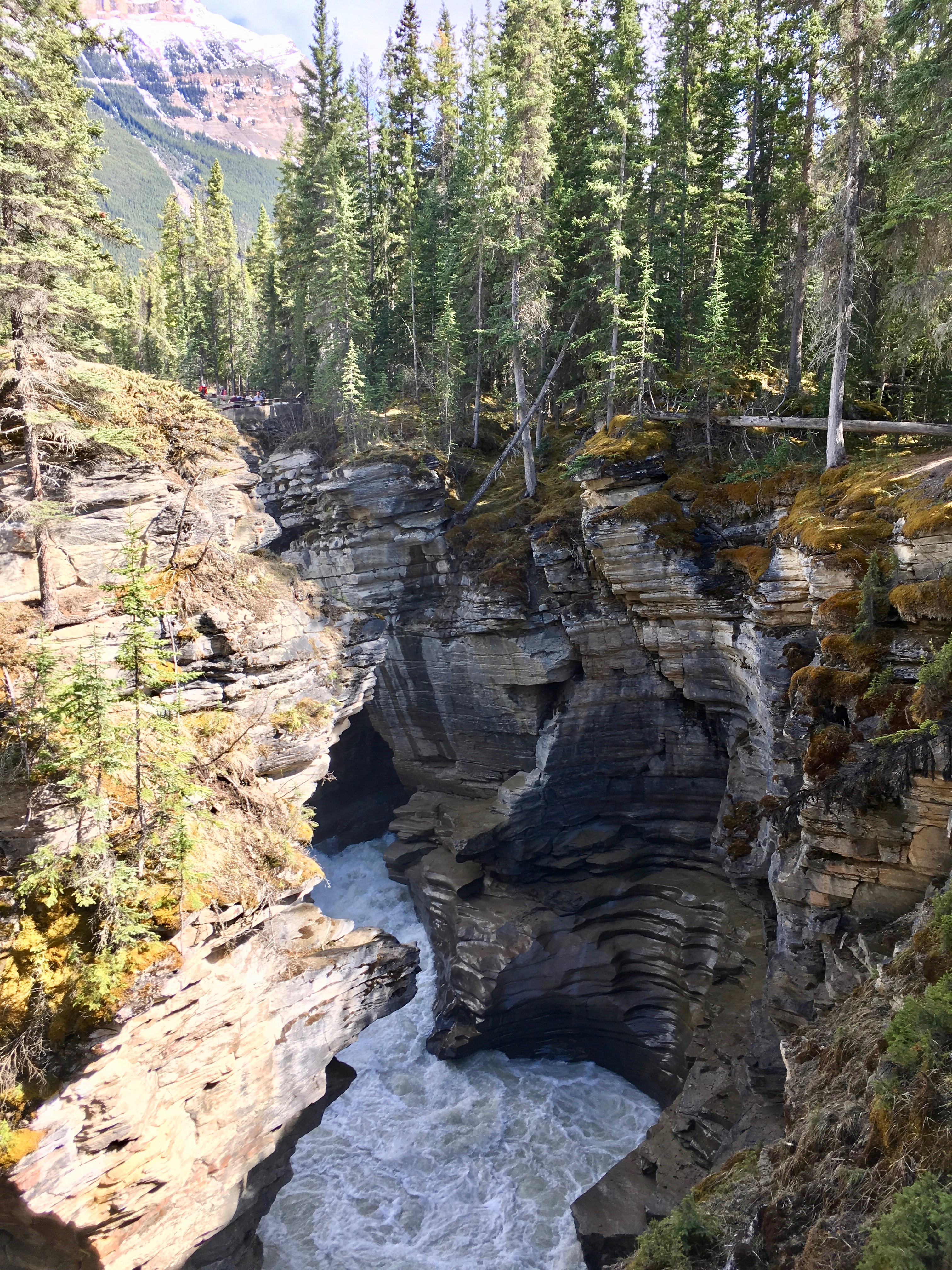 Athabasca Falls seen from the bridge, Jasper NP
