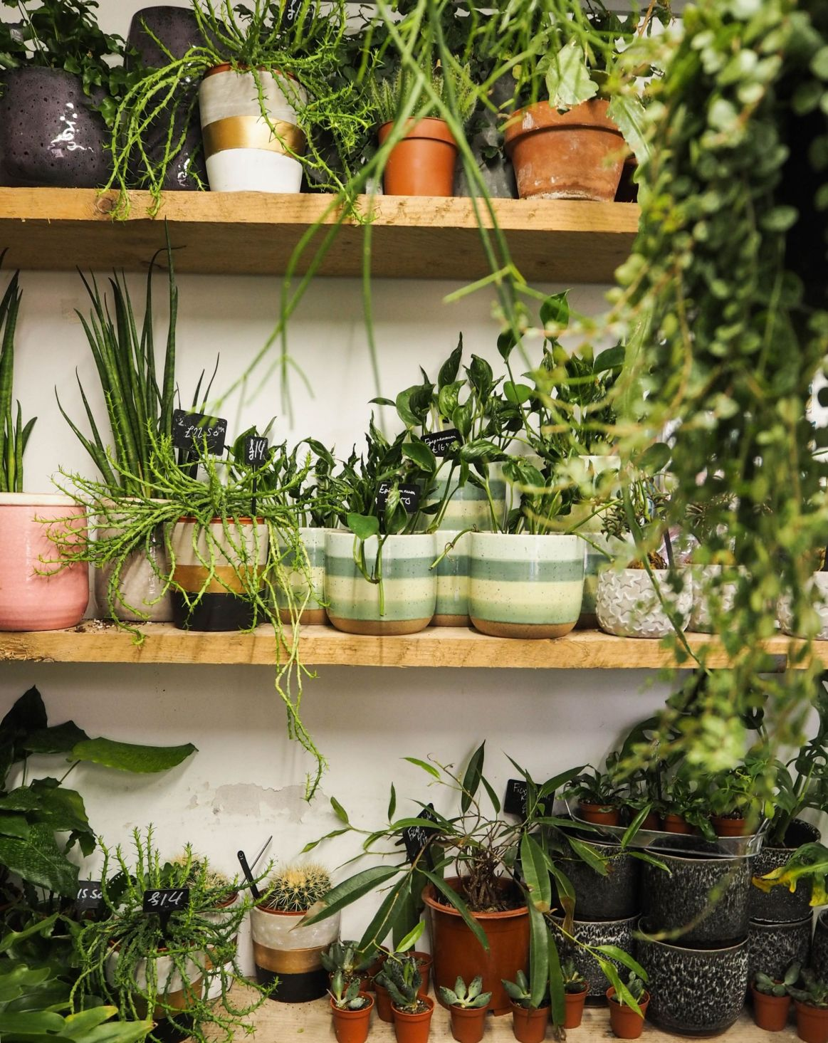plant shop travel guide kate winney