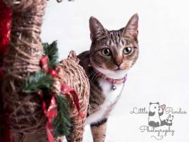 Photographer Hythe Kent pet cat