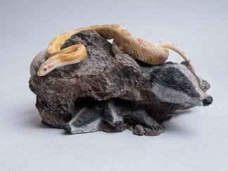 Yellow corn snake on a rock portrait