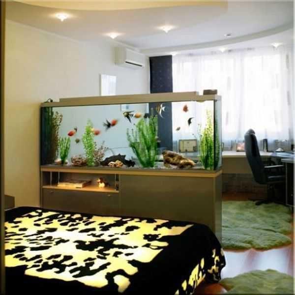 big home aquarium