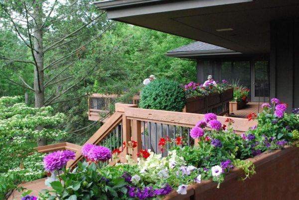 plant dahlias outside
