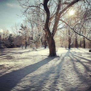 Pretty in the winter