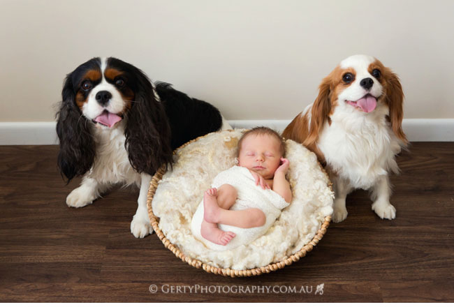 baby and dog photos cavalier king charles spaniels