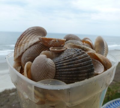 My Seashell Collection at Myrtle Beach
