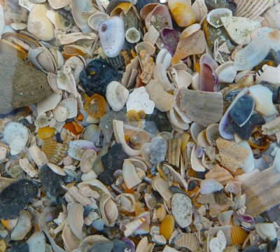 A View of Tiny Colorful Shells Underwater