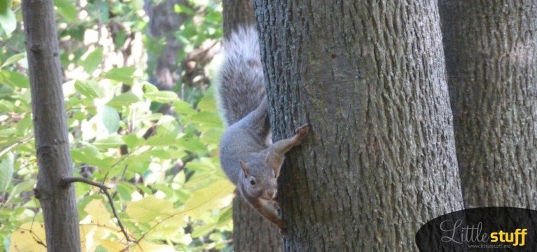 A Squirrel in My Woods