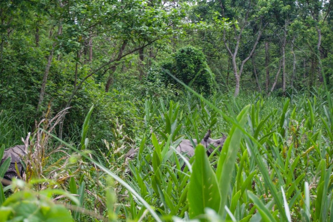 One-Horned Rhino Chitwan National Park Nepal