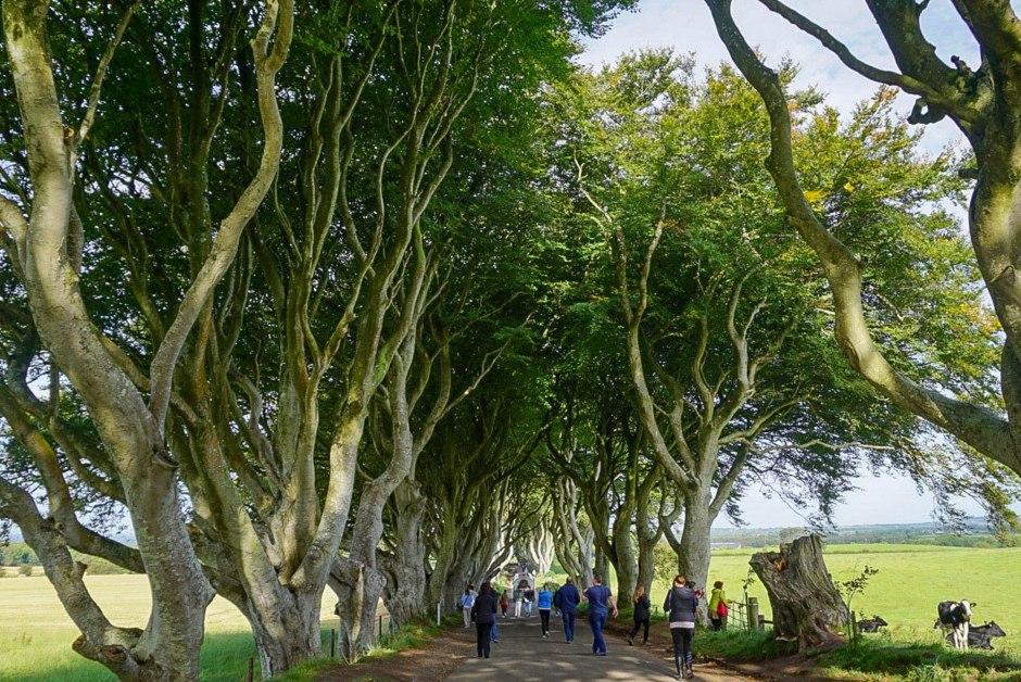 The Dark Hedges Northern Ireland - Giant's Causeway Day Trip