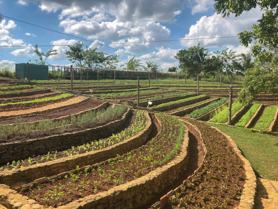 Vegetables and Herbs at Finca Marta Cuba