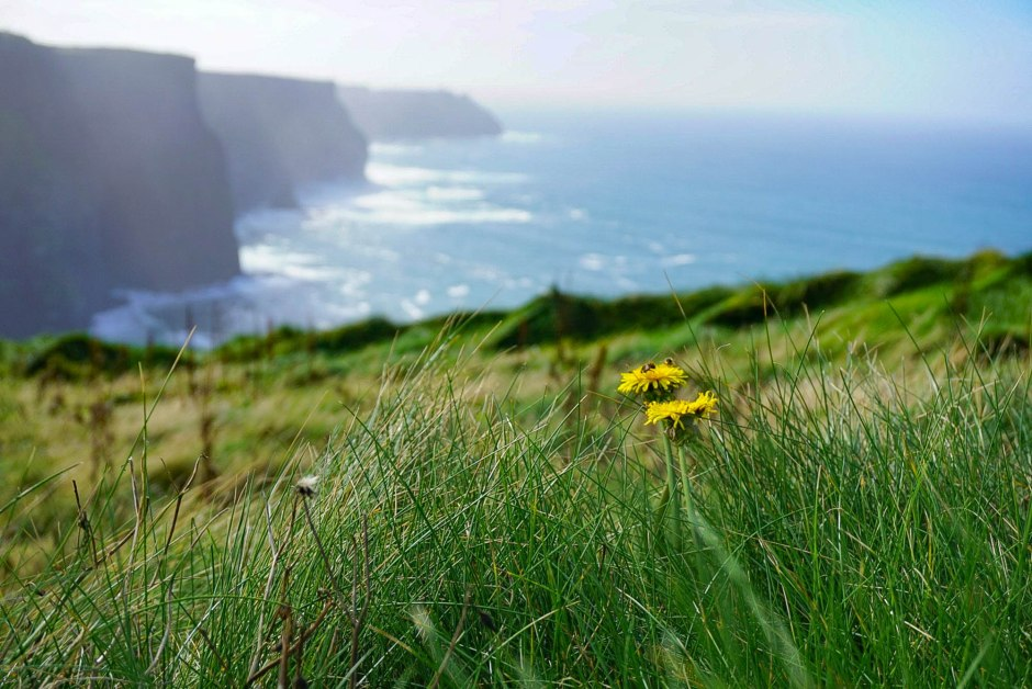 Cliffs of Moher - Special Protected Area SPA