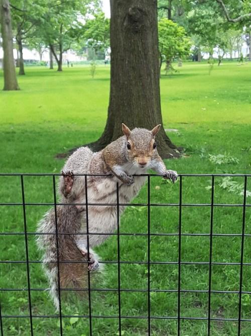 Battery Park – wo die Eichhörnchen in NYC zu Hause sind