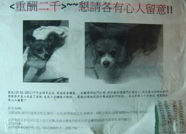 Lost Dog in Taipa Macau Old Town, Portuguese Colonial Area, SE Asia