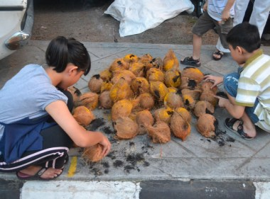 Kids Piling Coconuts, Third Day of Thaipusam in Penang, Southeast Asia