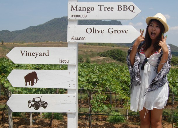 Attractions Hua Hin Hills Vineyard Tour, Wine Thailand, Southeast Asia