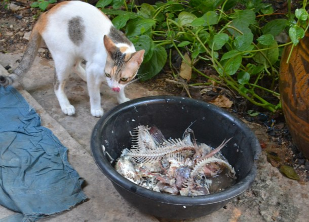 Cat Likes Fish, Buddhist Monk Blessing Ceremony for Health, Thailand
