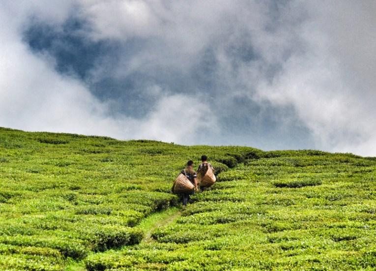 Himalaya Tea Fields, Himalayan Food, Eating in the Himalayas, Sikkim