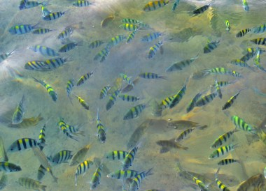 Feeding Coral Fish, Captain Hook Resort Koh Kood, Travel Thailand