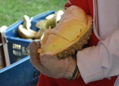 Opening Durian, Top Malaysian Food, Eating in Malaysia