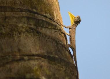 Draco Flying Lizard, Best Hotel Room Views in Asia, Bali