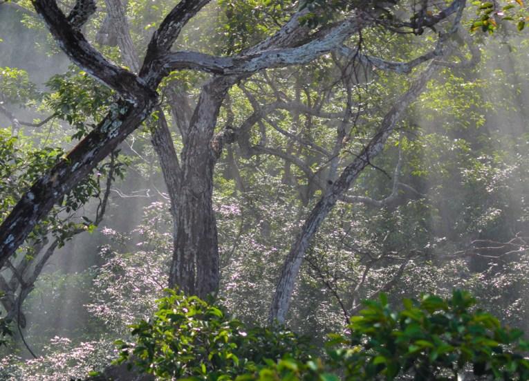Primary Rainforests in Brunei, Phobias in Borneo Rainforests