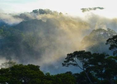Canopy Views, Ulu Ulu Resort, Temburong National Park Brunei Borneo