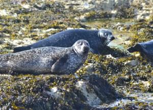 Seals on Rocks, Top Causeway Coast Attractions Northern Ireland