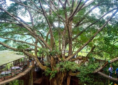 Rope Bridges, Giant Tree House Coffee Shop in Chiang Mai Homestay