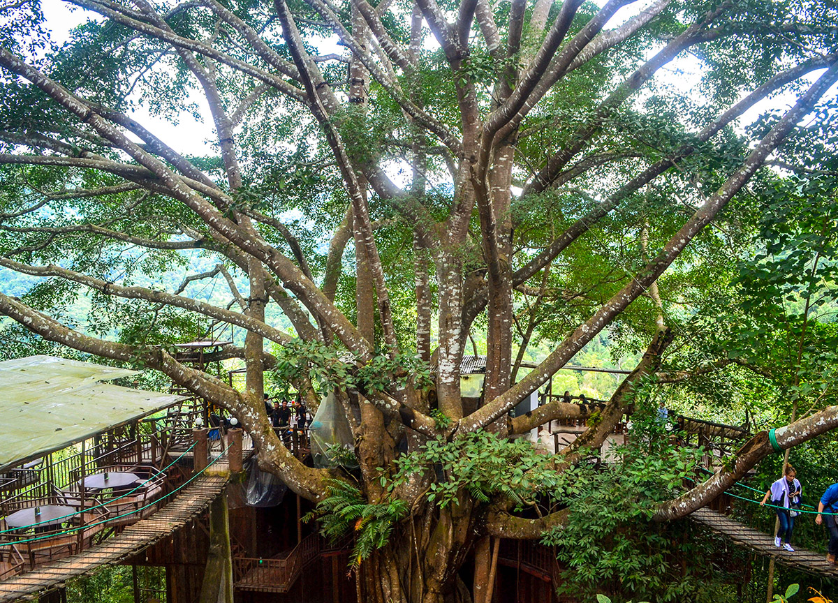 The Giant Tree House Coffee Shop In Chiang Mai And Homestay