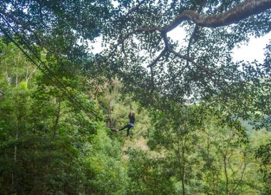 Jungle Zipline, Giant Tree House Coffee Shop in Chiang Mai Homestay