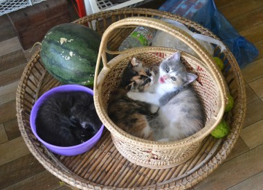 Kittens in Isaan Thailand, Applied Denied a UK Spouse Visa Abroad Financial Requirements