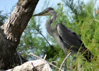 Herins Nesting, Camargue National Park Flamingos and Wild Horses