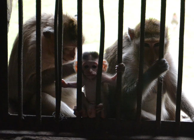 Bangkok to Lopburi Monkey Temple in Thailand, Southeast Asia