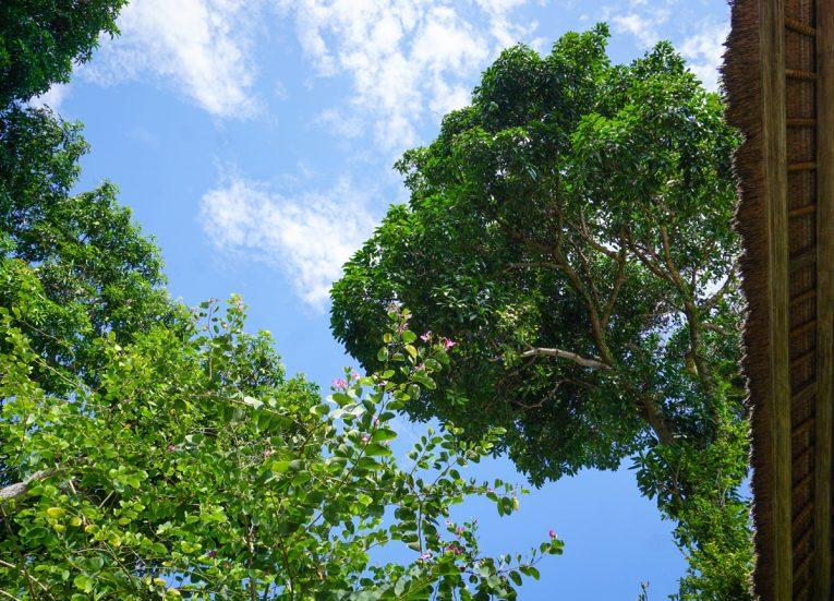 Trees and Greenery Private Pool Villas at Kayumanis Sanur Luxury Resort in Bali