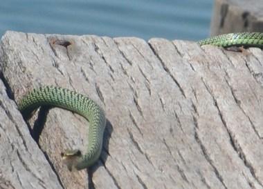 Slithery Snakes, Microsoft Lumia #makeithappen