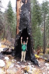 rae lake loop hike day 2 hollow tree