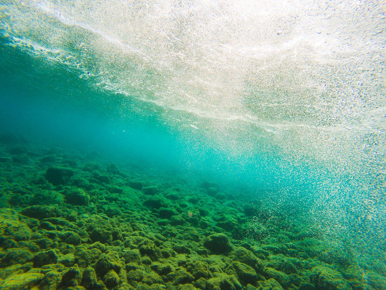 How Each Organism Works In The Ocean Food Chain