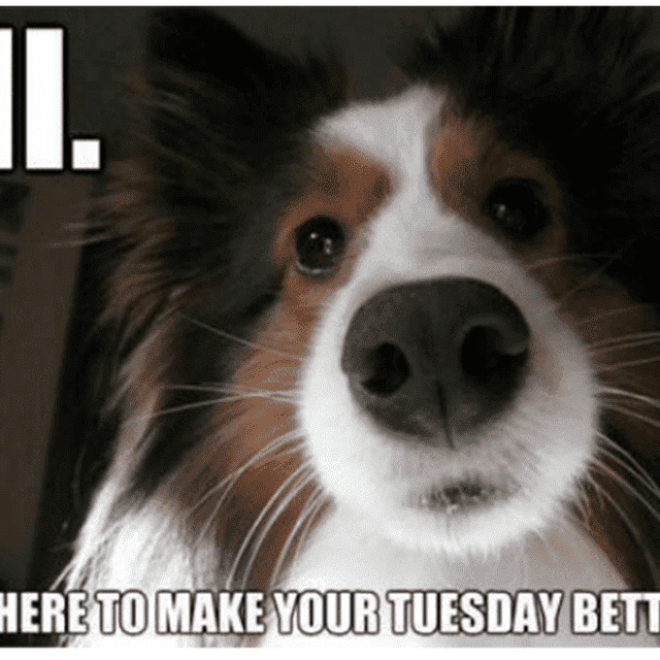 The 8 Best Tuesday Memes