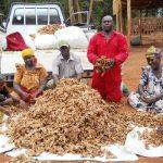 Download Ginger Farming Business Plan in Nigeria PDF
