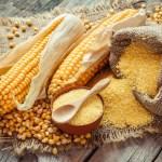 Complete Maize Flour Processing Business Plan PDF