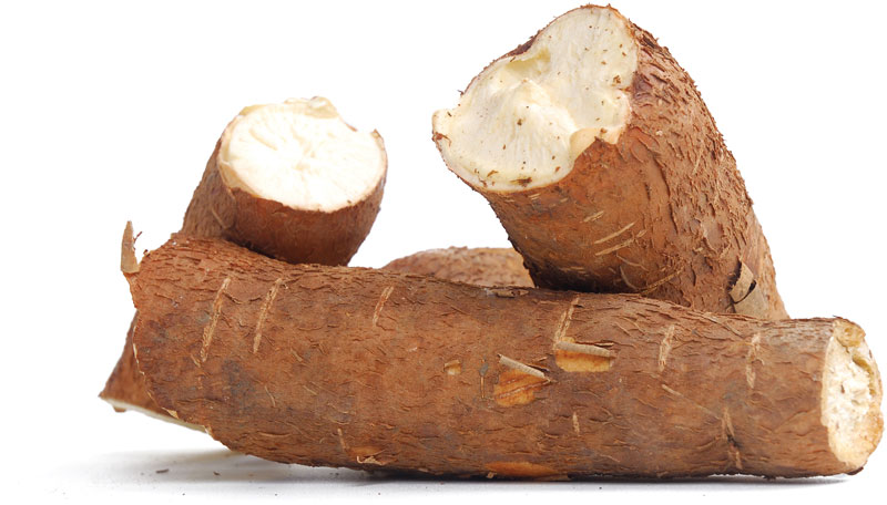 Download Cassava Processing Business Plan with 3 Years Financial Analysis