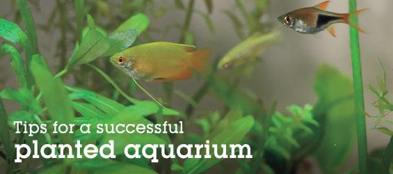 Freshwater Aquatic Plants Sale
