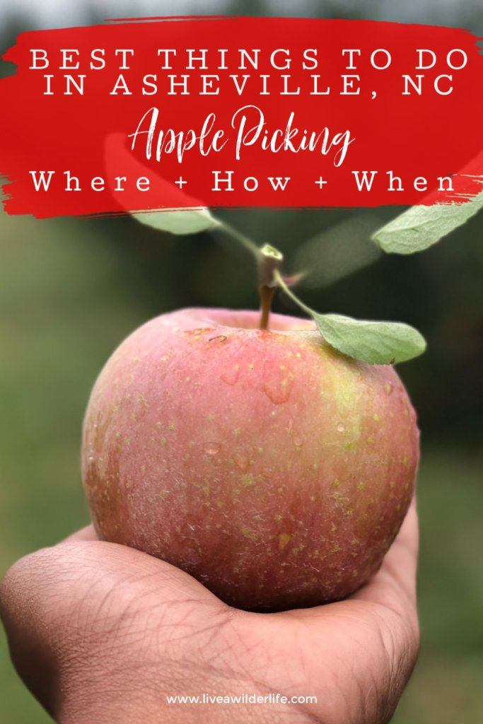 apple sitting on someones outstretched hand