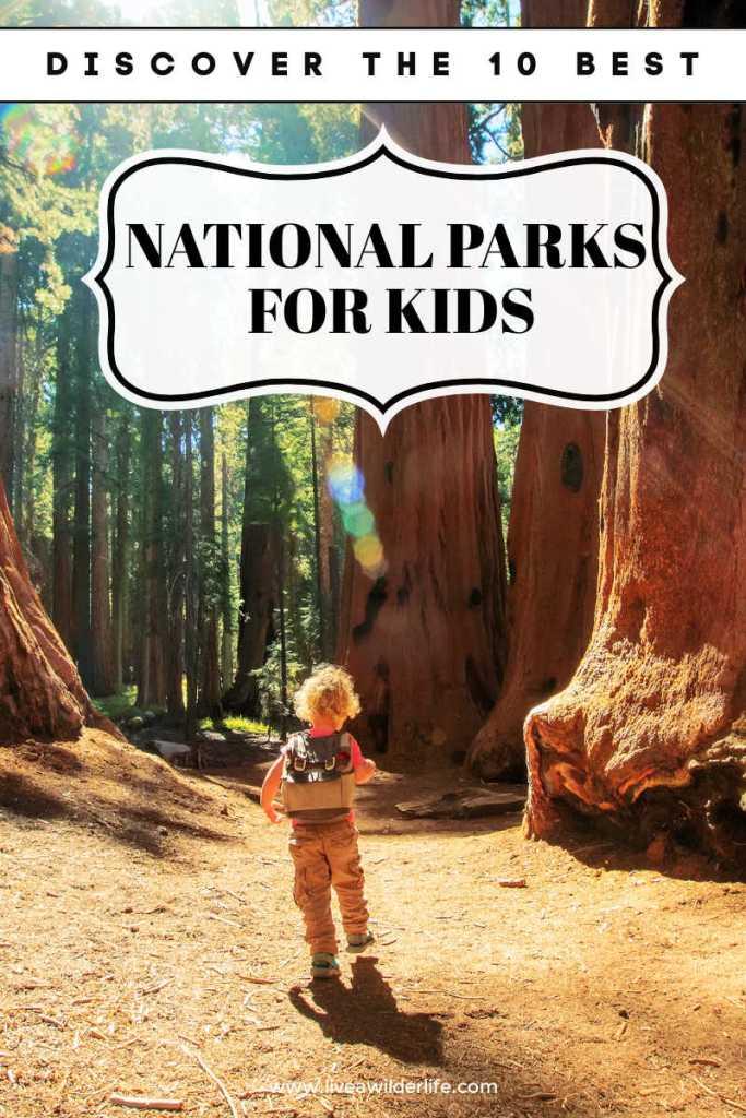 boy walking through trees of national park