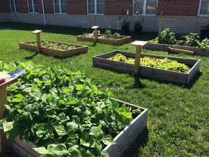 Live Civilly Community Gardens