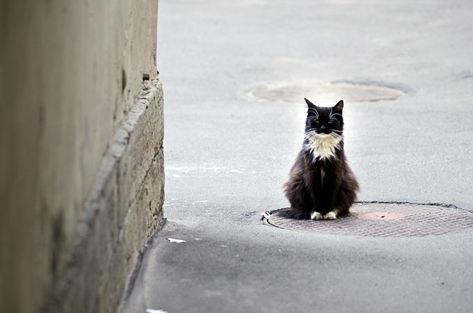 St. Petersburg Cats