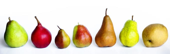 Different types of pears on a white background
